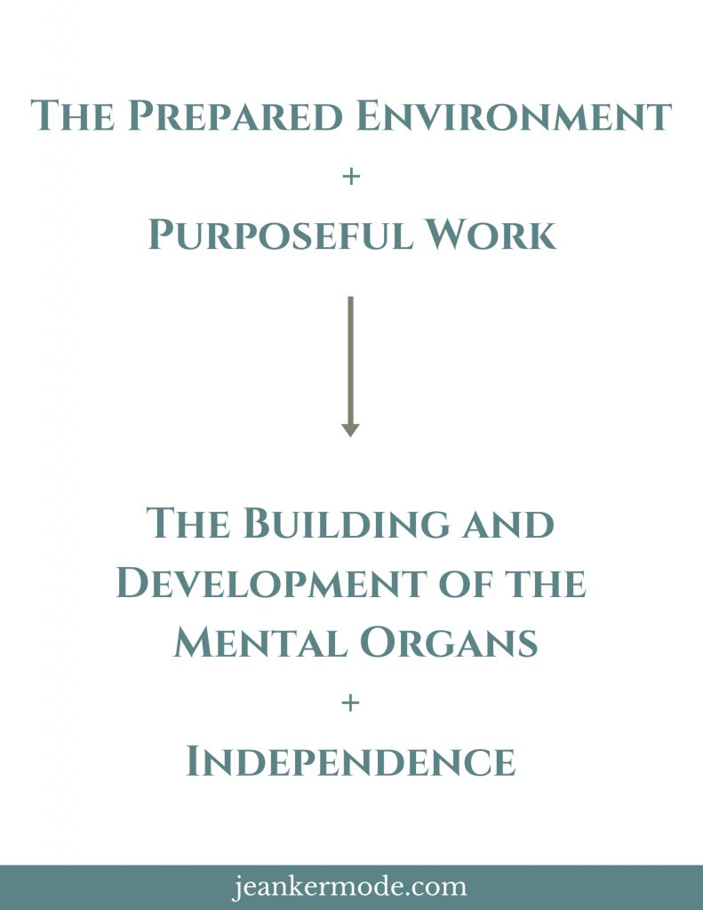 Diagram showing that the prepared environment plus purposeful work leads to the building and development of the mental organs and independence